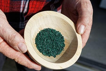 Algues spiruline - Naturoscience