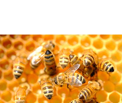 Gelée Royale - Naturoscience