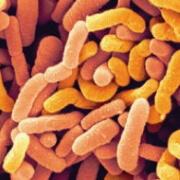 ferments lactiques Probioxyl - Laboratoire Naturoscience
