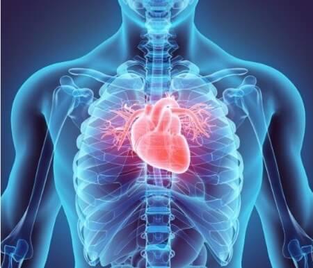 Coeur baisse de tonus - Laboratoire-Naturoscience