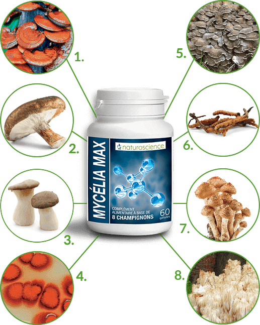 Mycelia Max - champignons