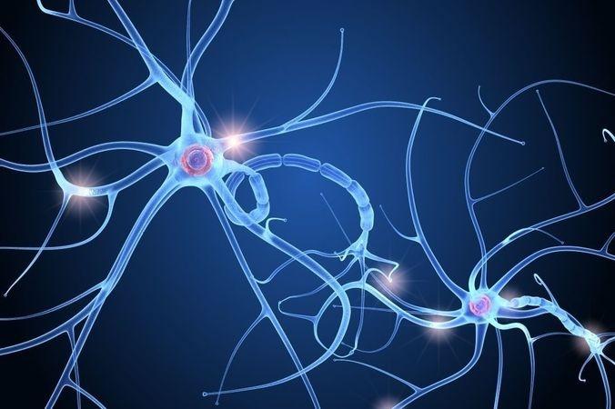 blog liaison neuronal - Laboratoire Naturoscience