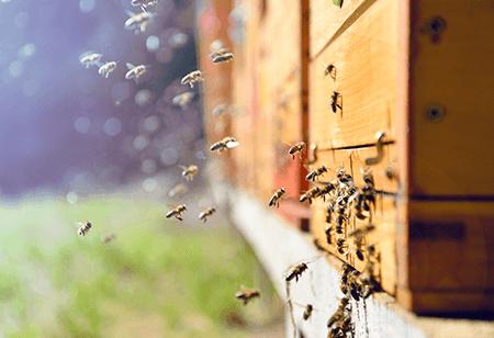 Ruche abeilles - Naturoscience