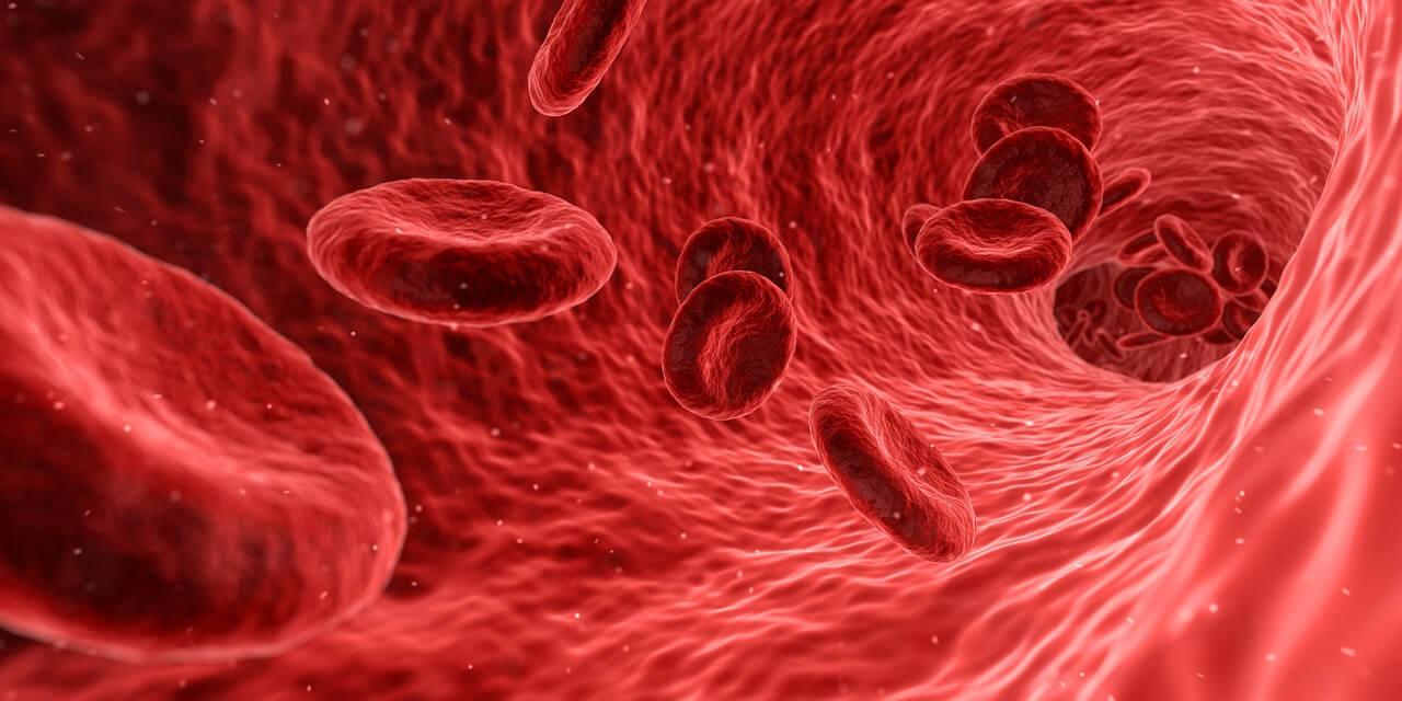 article sur la circulation du sang - Laboratoire Naturoscience