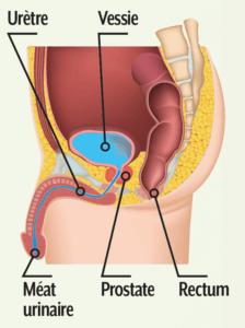 Troubles Prostate Utérus Rectum SerenActiv - Laboratoire Naturoscience