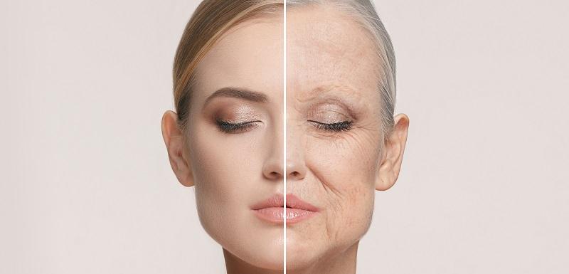 vieillissement cellulaire
